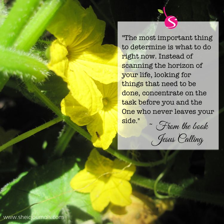 cucumber-flower-quote